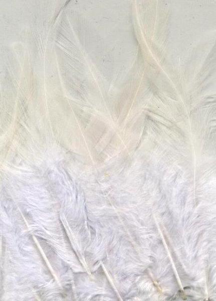 Feathers Pure White 15pcs