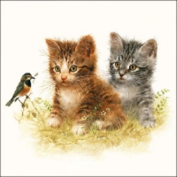 Salvrätikud Ambiente Kitten friend 33x33cm, 20tk