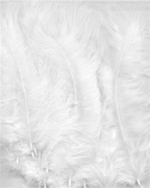Hobby & Crafting Fun Feathers Marabou white 15pcs