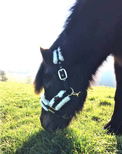 Kentucky sheepskin noseband